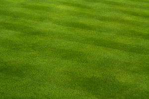 4 Tips For Cutting Grass
