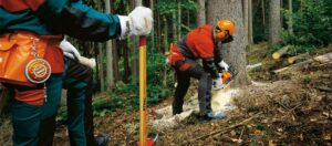 6 Chainsaw Safety Tips