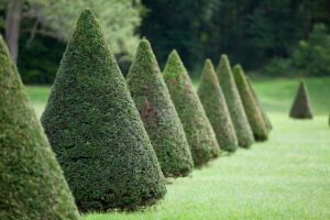4 Reasons For Pruning Trees & Shrubs