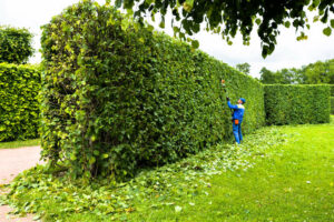 Reasons To Prune Your Home Garden