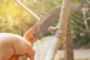 8 Pruning Tools You Need For Your Home