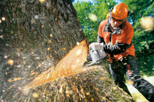 3 Variables To Consider When Buying The Perfect Chainsaw