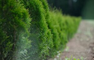 D:\Desktop\Using Hedgerows for Privacy
