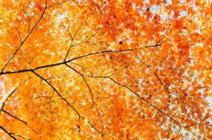 Remove term: Maintaining Trees and Shrubs Maintaining Trees and Shrubs