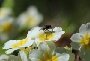 reducing flies in your garden